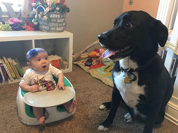 Первая встреча малыша и собаки