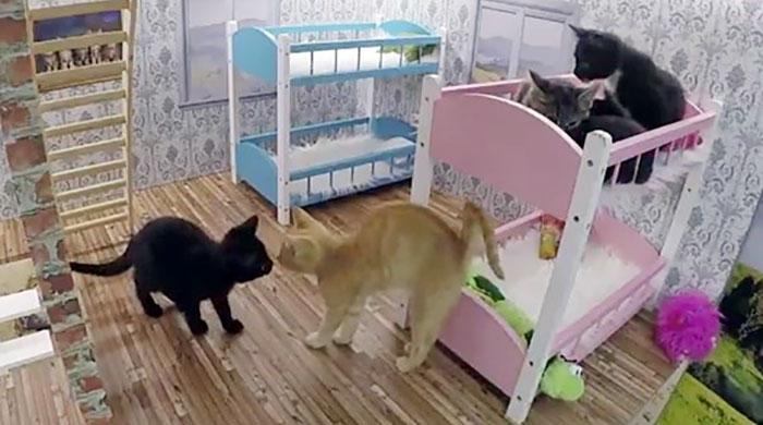 Мебель для спальни кошек