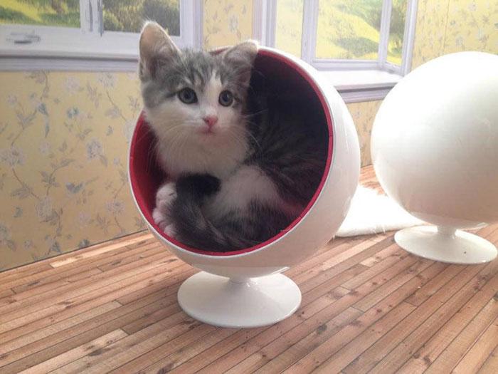 Милый котенок в кресле