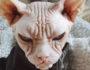 10 самых злых животных