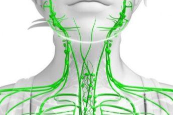 Чистая лимфатическая система - залог здоровья