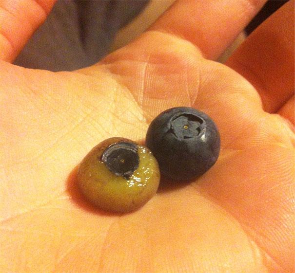 10-neobychnyh-i-nemnogo-pugayushhih-snimkov-fruktov-10
