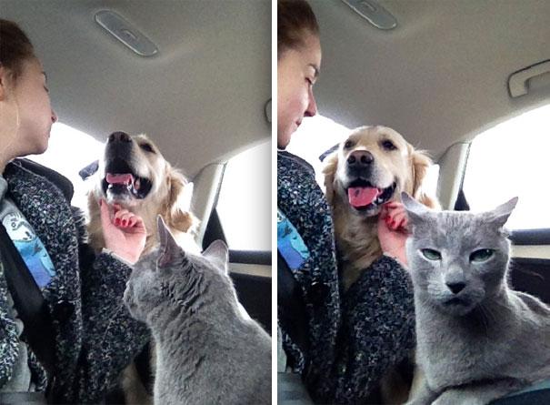 Совместное содержании кошки и собаки