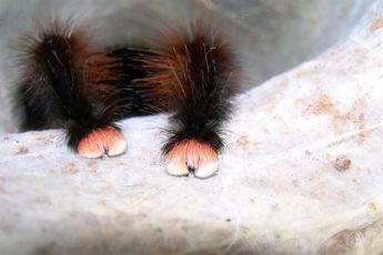 Самые красивые лапки пауков