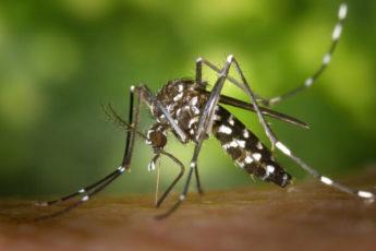 Зачем комарам необходимо пить кровь?