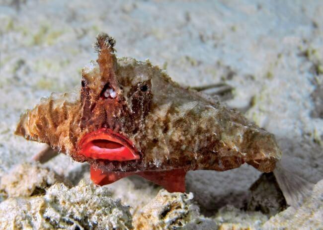 Длинноносая рыба