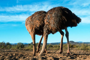 Распространенные мифы о животных