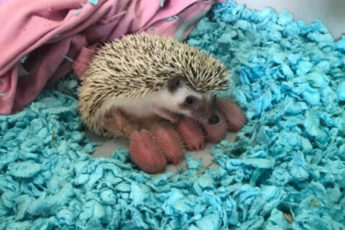 18 милых малышей животных