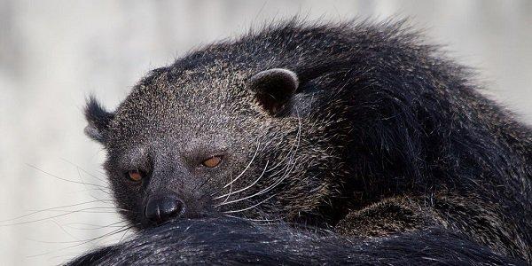 Luxalux.ru - Кошачьи медведи