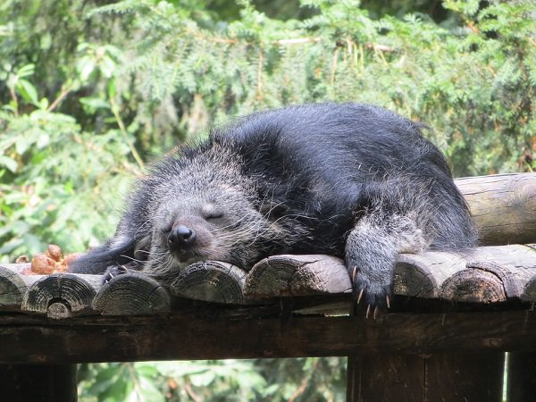 Спящий зверек