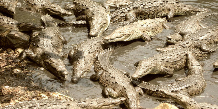 Рамри, остров крокодилов