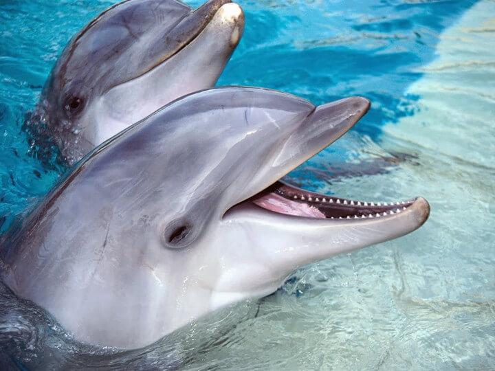 Дельфин афалина и безопасность