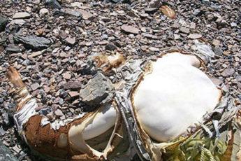 На Эвересте тела умерших альпинистов используют как вехи