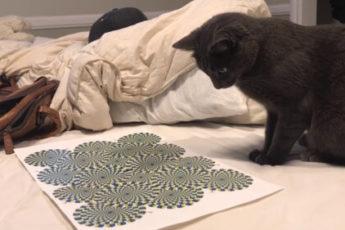 Сражения кота с оптической иллюзией