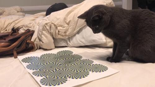 Видео сражения кота с оптической иллюзией стало хитом соцсетей