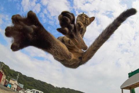 Этот японский фотограф специализируется на съемке котов ниндзя. Оценка результата — просто здорово!