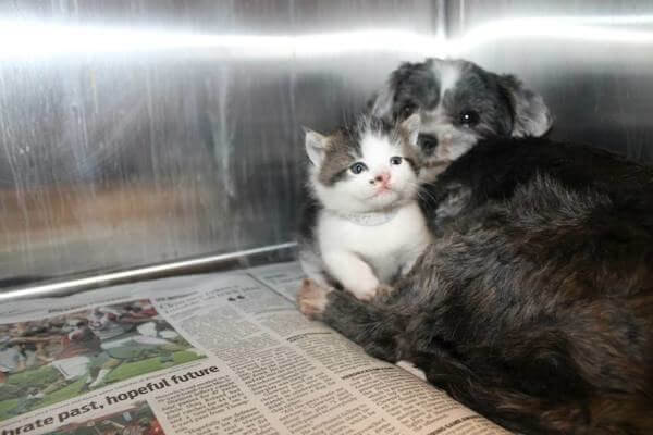 Собака кормила и защищала котенка, брошенного на дне глубокого оврага