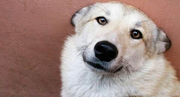 Собака два дня согревала мальчика, которого мама бросила умирать на морозе