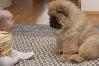 Врач посоветовал семье купить определённую собаку