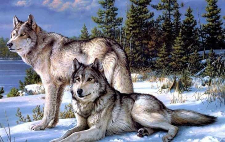 mudraya-pritcha-pro-dvuh-volkov-2