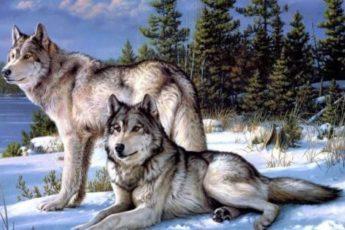 Мудрая притча про двух волков