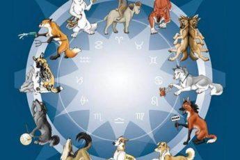 Ваш знак зодиака покажет, что за собака вы по гороскопу