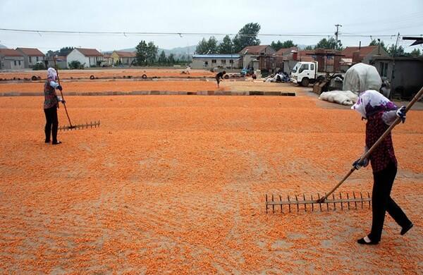 Фальшивые креветки: китайцы научились подделывать все, даже морепродукты