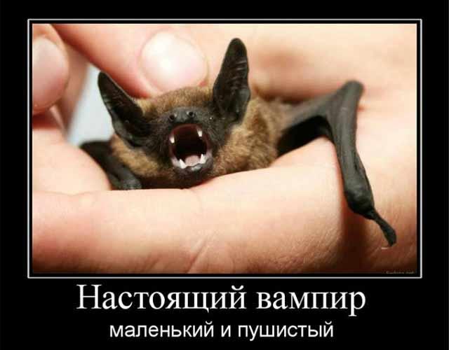 glavnye-vampiry-sredi-znakov-zodiaka-8