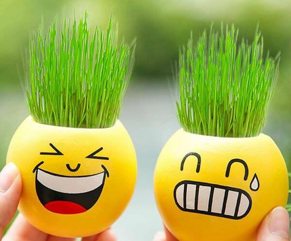 Почему не растет на подоконнике укроп? Как нужно выращивать укроп дома в зимнее время, чтобы срезать много пышной зелени