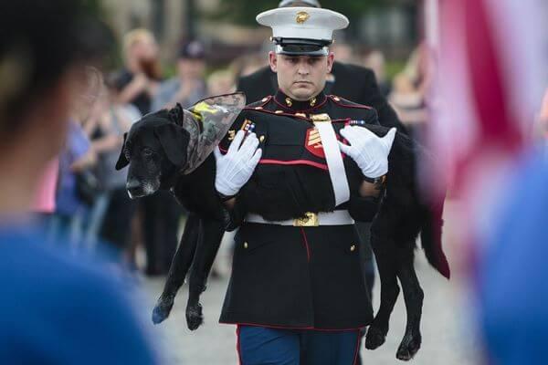 Собаку-сапера проводили в последний путь с почестями