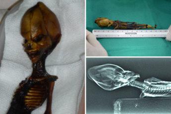 Маленький «инопланетянин»