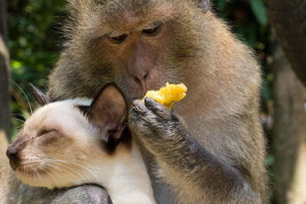 Зачем дикие животные заводят питомцев