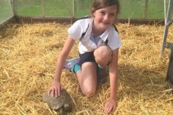 Девочка развесила трогательные объявления о пропавшем друге