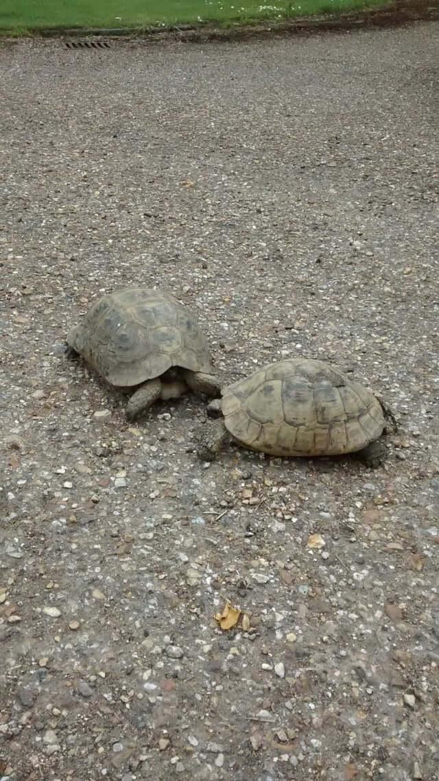 missing-turtle-luxalux.ru-post-1