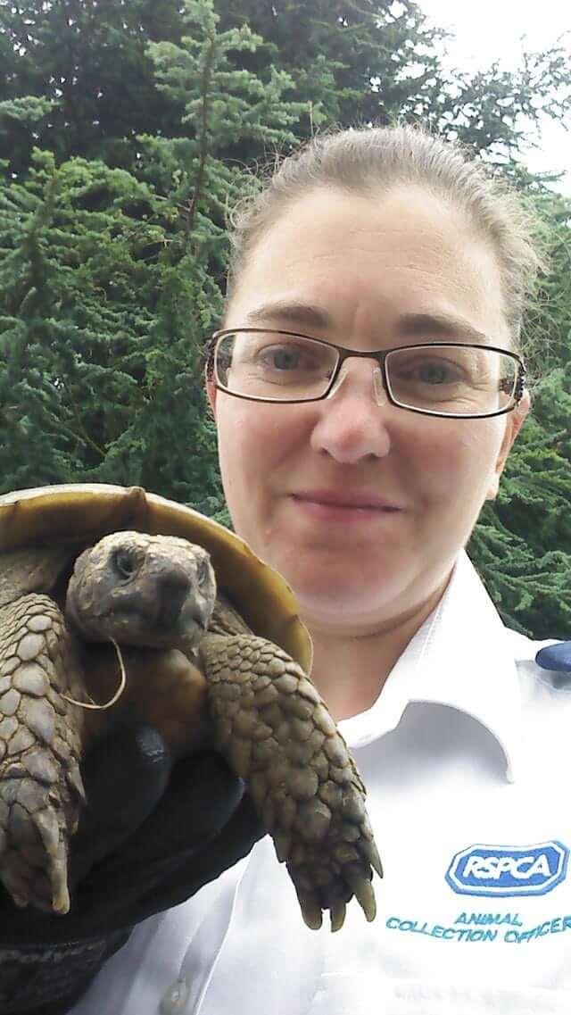 missing-turtle-luxalux.ru-post-4