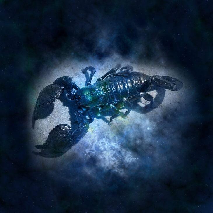 https://luxalux.ru/ kak-skorpionu-i-rybe-vyzhit-v-odnoy-stihii