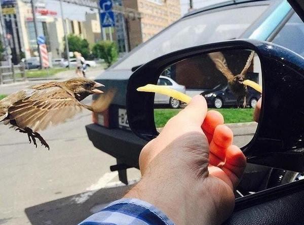 Мужчина просто покормил птицу, но случайно создал иллюзию, которая заставила всех поломать головы