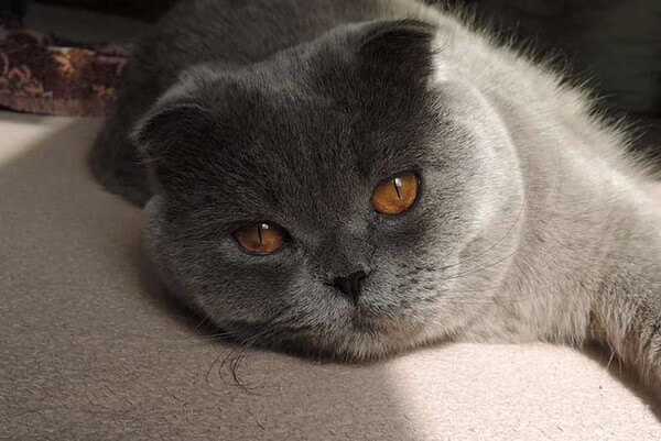 Посмотрите, как уморительно выглядят эмоции кота (21 милых фото)