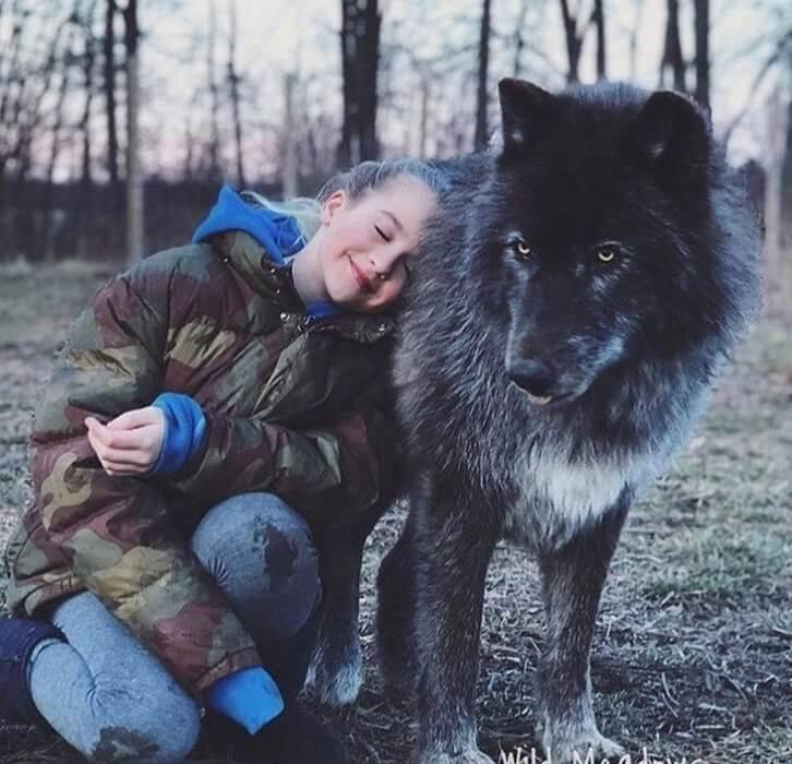 https://luxalux.ru/volkosoby-60-kilogrammovye-nezhnye-giganty-kotorye-ochen-lyubyat-obnimatsya-foto-i-video