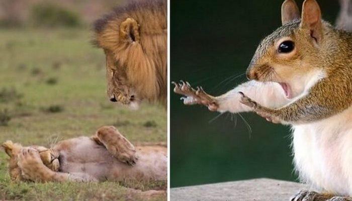 Названы самые смешные фото дикой природы