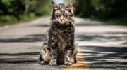 Студией Paramount Pictures представлен первый трейлер ремейка «Кладбища домашних животных»