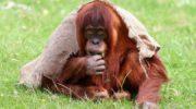 Трогательные истории о невероятной дружбе между людьми и животными