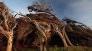 20 фотографий, которые доказывают, что природа — самая сильная сила на этой планете