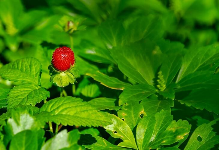 strawberry-parts-post-luxalux.ru